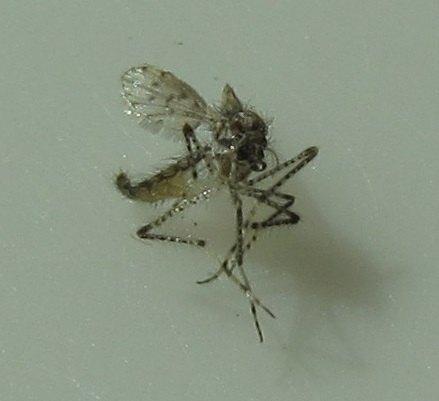 q bug id, pest control