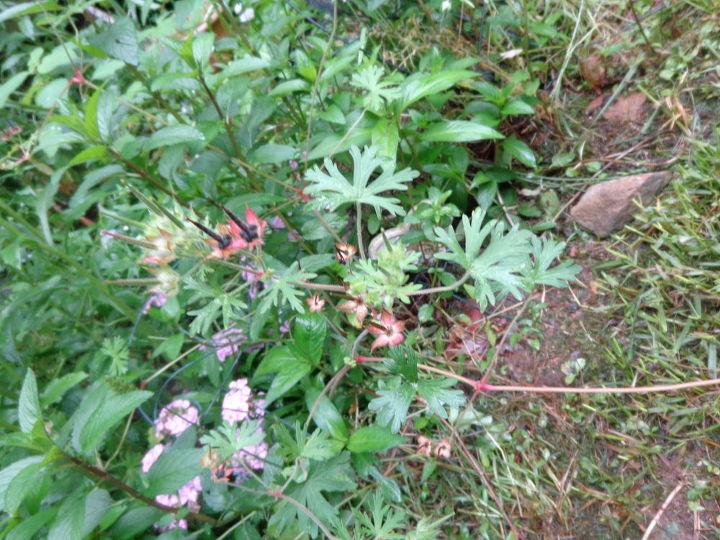 q plant identification, gardening, NAme this plant
