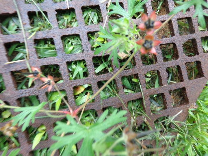 q plant identification, gardening, a runner plan
