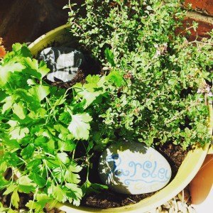 plant a kitchen herb garden hometalk