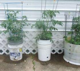 Bucket Gardening Very Very Satisfactory Hometalk