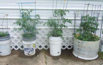 """""""Bucket"""" Gardening...very, Very Satisfactory!"""