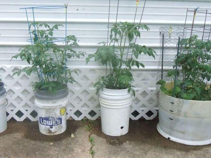 bucket gardening very very satisfactory, container gardening, gardening