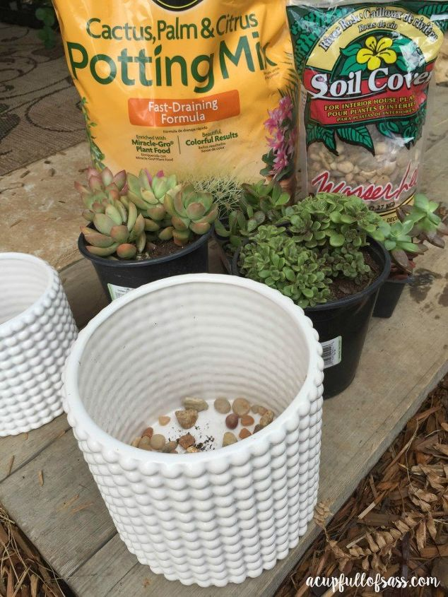 how to care for succulent plants, container gardening, flowers, gardening, how to, succulents