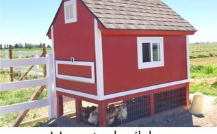 barn pallet chicken coop, homesteading, outdoor living, pallet, repurposing upcycling