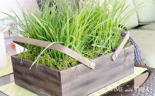 cat grass seeds spanish moss inexpensive lush green planter, container gardening, gardening