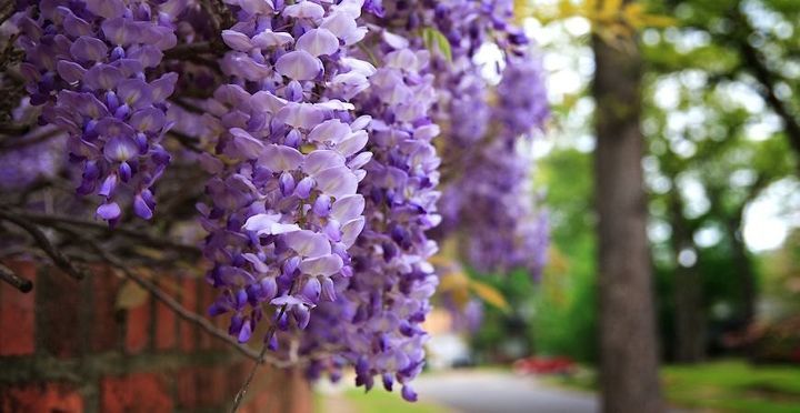 7 favorite climbing plants to wow your outdoor space, flowers, gardening