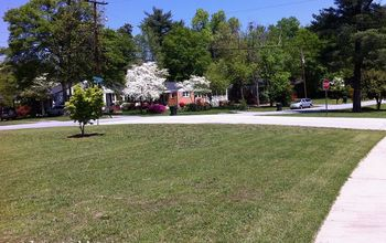planting perennials in sunny garden, flowers, gardening, perennial