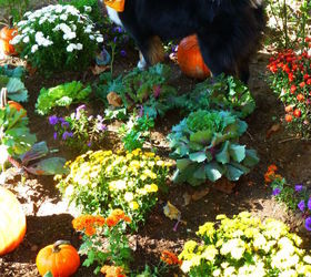 Any Pretty Solutions To Keep My Dog Out Of My Backyard Garden? | Hometalk