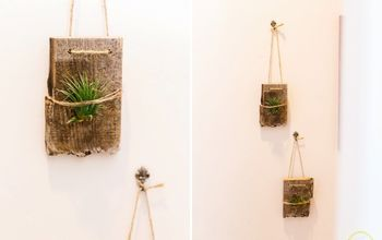 wall mounted air plants, container gardening, gardening, how to