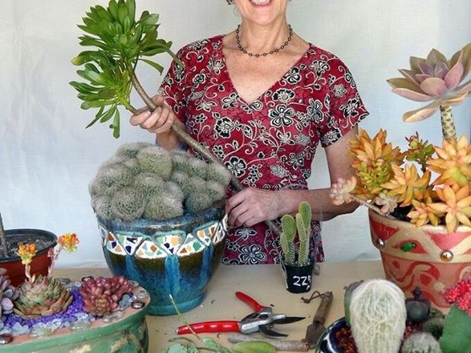 how to propagate succulents, container gardening, flowers, gardening, succulents