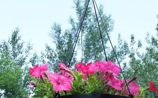 upgraded plastic plant pots with sisal rope upgrade, container gardening, gardening, repurposing upcycling