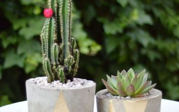 how to make concrete planters, concrete masonry, container gardening, gardening, how to, succulents, Finished concrete planters