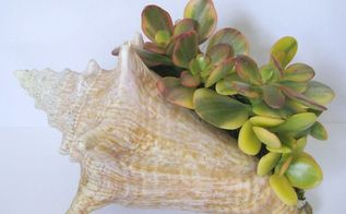 succulent filled conch shells, container gardening, flowers, repurposing upcycling, succulents