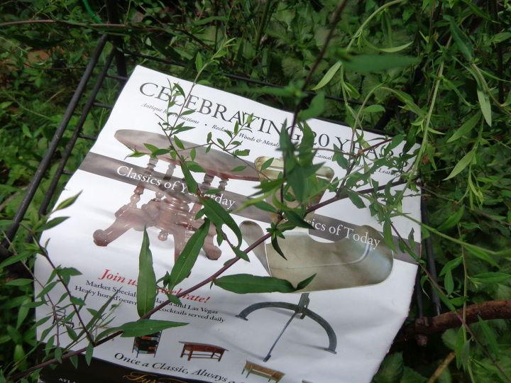 q plant identification, gardening, what is this bush ID
