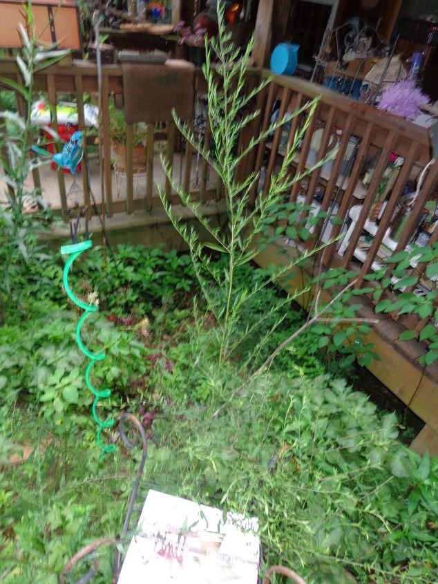 q plant identification, gardening, Growing tall