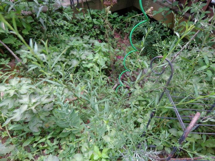 q plant identification, gardening, Plant ID
