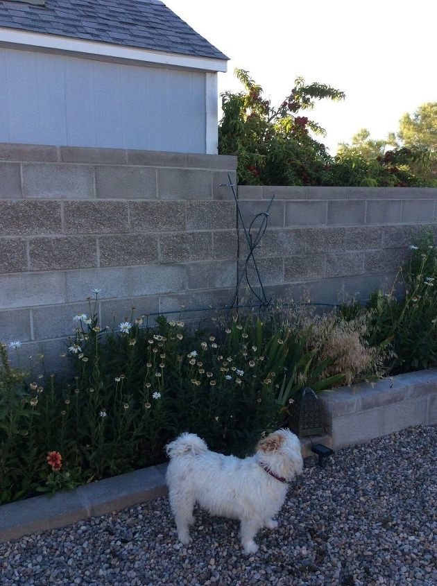 q soundproof concrete block fence, concrete masonry, fences, Concrete block fence and one of the culprits