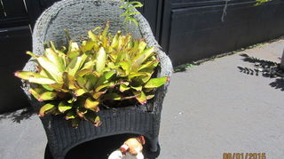 , My old chair has bromeliads but you can fill with any kind of plant that you like Ivy would look awesome