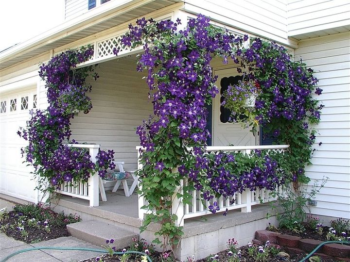 these breathtaking pictures of clematis are all you need to see today, fences, flowers, gardening, Photo via Midnight Musings