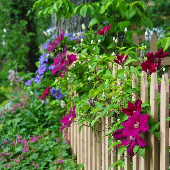 Photo via Julie @[url=http://wifemothergardener.blogspot.co.il/]Wife, Mother, Gardener[/url]