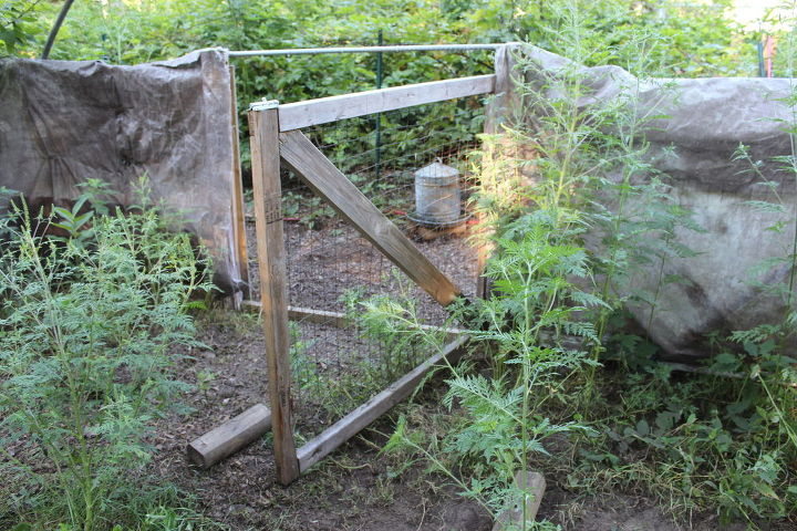 how to build a chicken condo complex on the small house homestead, fences, gardening, homesteading