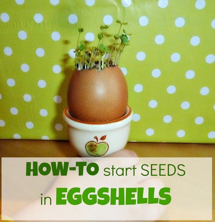 how to start seeds in eggshells zero cost planters, container gardening, gardening, how to
