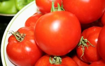 Tomato Problems (And How to Fix Them)