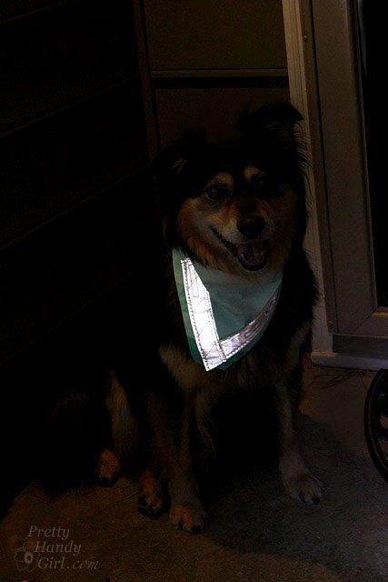 diy dog reflector bandana, crafts, pets animals