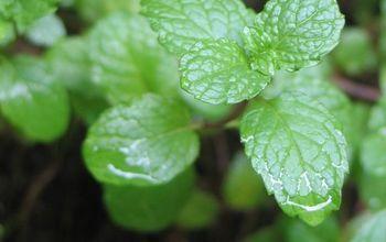 8 herbs for your indoor herb garden, container gardening, gardening