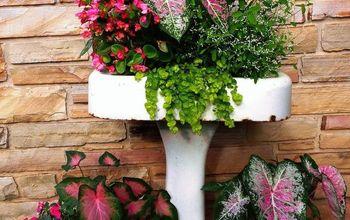repurposing an old pedestal sink into a planter, container gardening, flowers, gardening, repurposing upcycling, Pedestal sink planter