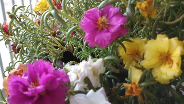 q flower, flowers, gardening