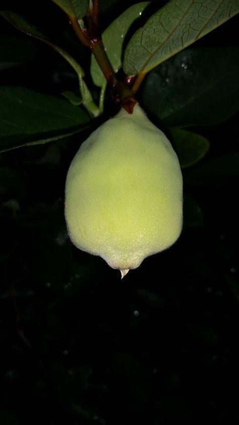 q plant id, gardening
