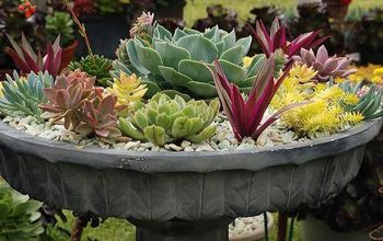 Check Out These 4 Easy Steps to Creating a Beautiful Container Garden