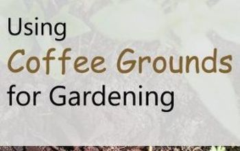 using coffee grounds for gardening guide on correct uses, container gardening, gardening
