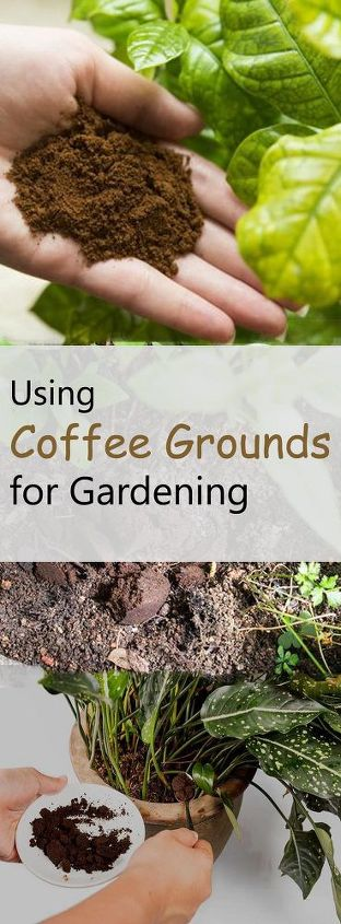 Using coffee grounds for gardening guide on correct uses hometalk Coffee grounds for garden