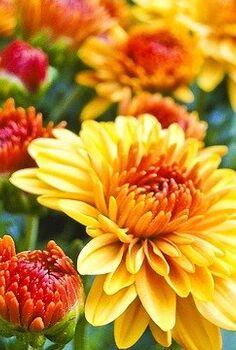 fall gardening checklist for busy people, gardening