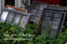 repurposed windows greenhouse, diy, gardening, home improvement, repurposing upcycling, woodworking projects, Old wooden windows for our greenhouse
