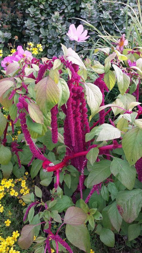 q flower identification, flowers, gardening