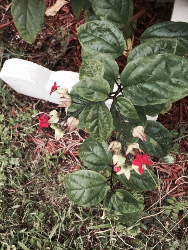 q flower name, flowers, gardening