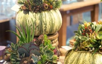Succulent Ideas for Fall