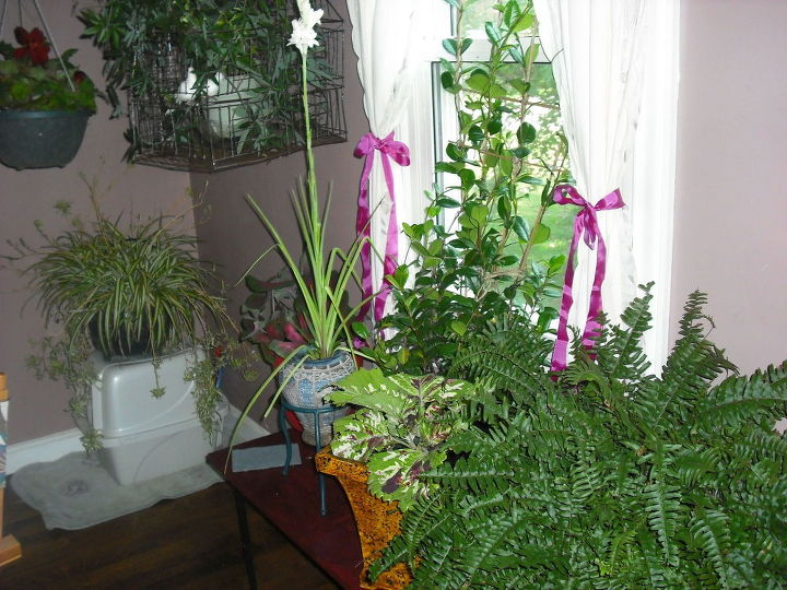 q i am bringing many plants indoors this fall i have few windows, container gardening, gardening, home decor, plant care, I used a board on patio tables in this windo
