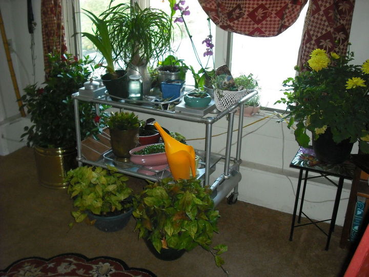q i am bringing many plants indoors this fall i have few windows, container gardening, gardening, home decor, plant care, antique tea cart is not working for all these plants there are many plants not included in these pics HELP