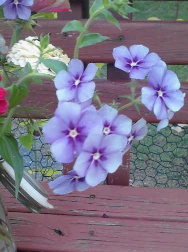 q identification, flowers, gardening, plant id