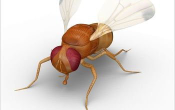 how to get rid of fruit flies, cleaning tips, how to, pest control