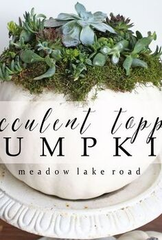 succulent topped pumpkin, crafts, seasonal holiday decor, succulents