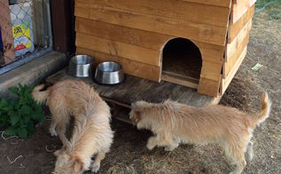 we madet a pallet puppy palace, diy, pallet, pets animals, repurposing upcycling, woodworking projects