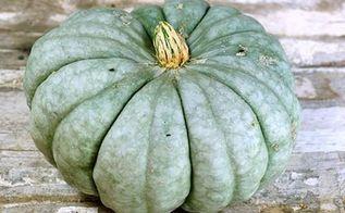10 unusual edible pumpkins, gardening, seasonal holiday decor