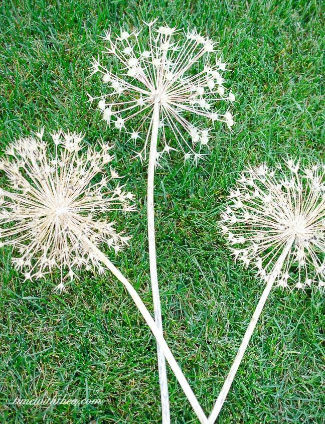 how to create gorgeous metallic painted dried giant allium flowers, crafts, how to