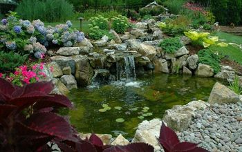 aquascape water gardens the appeal of koi ponds, landscape, ponds water features, Useful Pond Koi